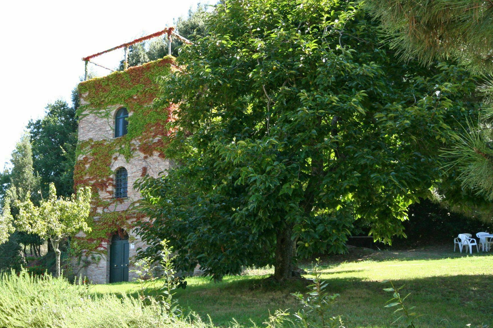Castellaccio 8image 9
